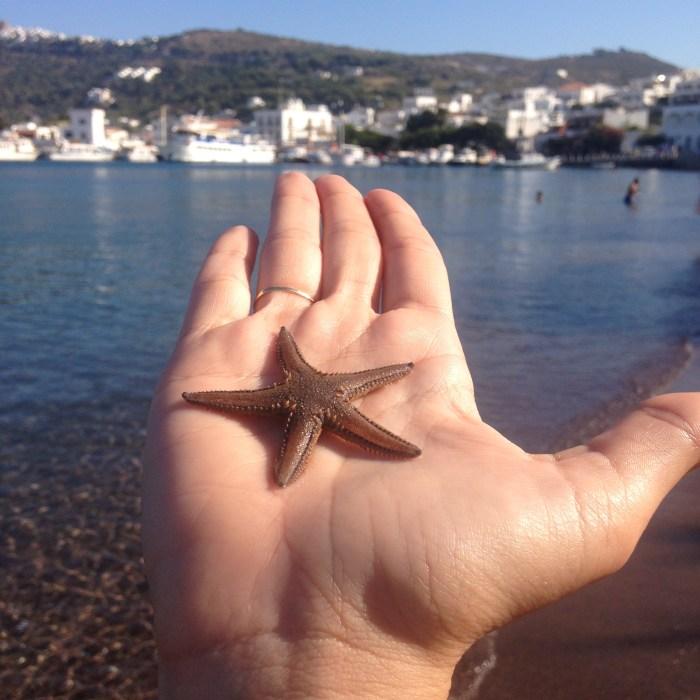 starfish in Patmos greece