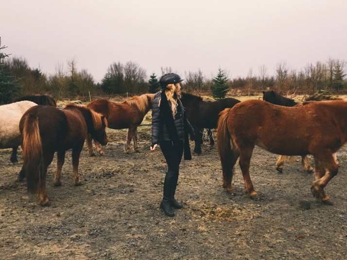 Horseback Riding With Icelandic Horses In Iceland