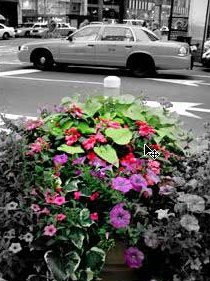Black & White with touch of color
