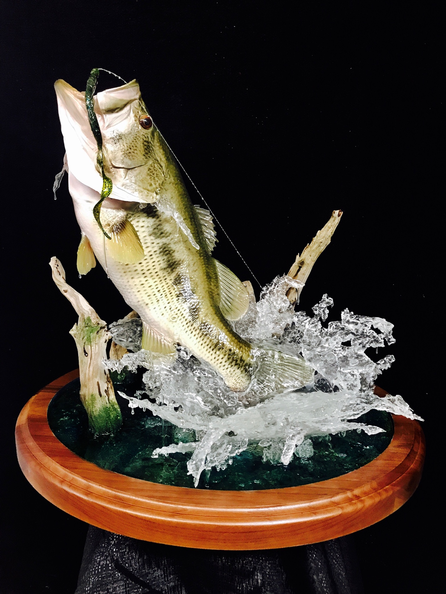 Fish Taxidermy  World Award Winning Artist Vance Montgomery