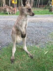 Lost baby roo