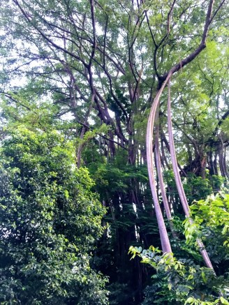 2017.04.25_Fort Canning (11)