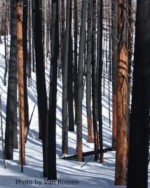 Palalie Burned Trees
