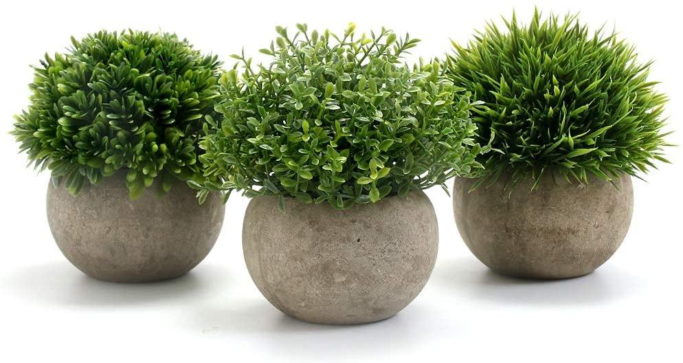 Mini Plantas para decorar furgoneta camper o autocaravana