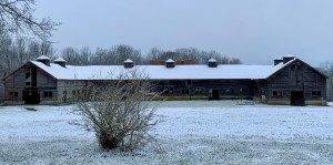 Header image of Jersey cow barn