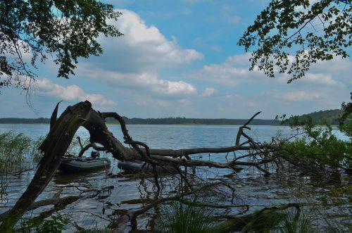 Toter Baum in einem Natursee in Mecklenburg