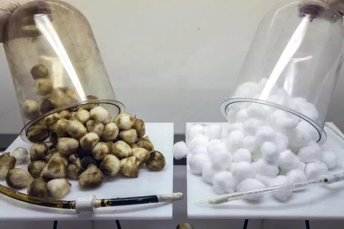 Cotton Ball Experiment