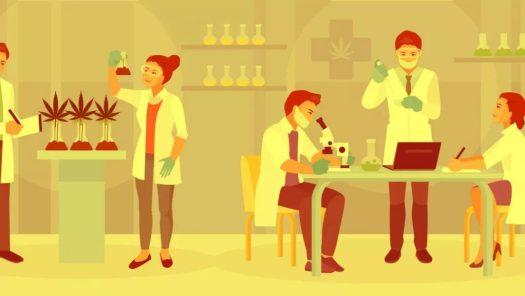 CBD as a cannabinoid and measure its medicinal function
