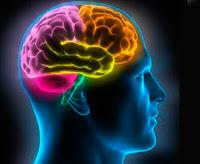 חזותי של המוח של האדם --- תמונה על ידי © Matthias Kulka / Corbis
