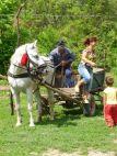 Pferdefuhrwerk der Bauern