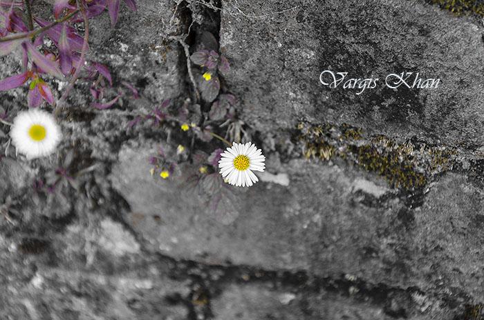 vargis-khan-flower-photography-1