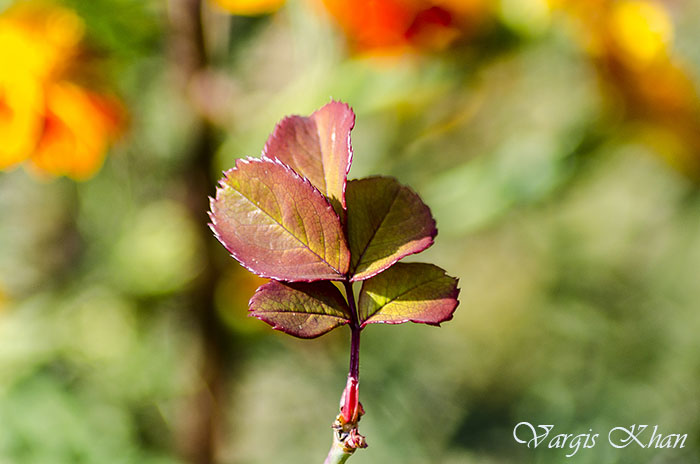 vargis-khan-flower-photography-9
