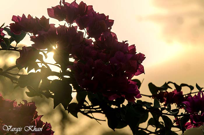 flowers-at-india-gate-3