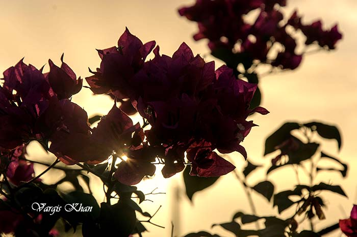 Flower Photography at India Gate