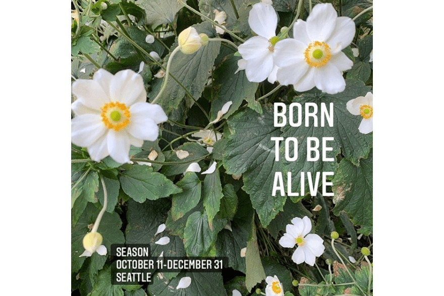 "Exhibition flyer for ""Born to Be Alive"" at Season Gallery, featuring a photograph of white anemone flowers and their green leaves with the exhibition title overlaid in white and the exhibition dates and location, October 11-December 31, Seattle, in white text with an opaque black background."
