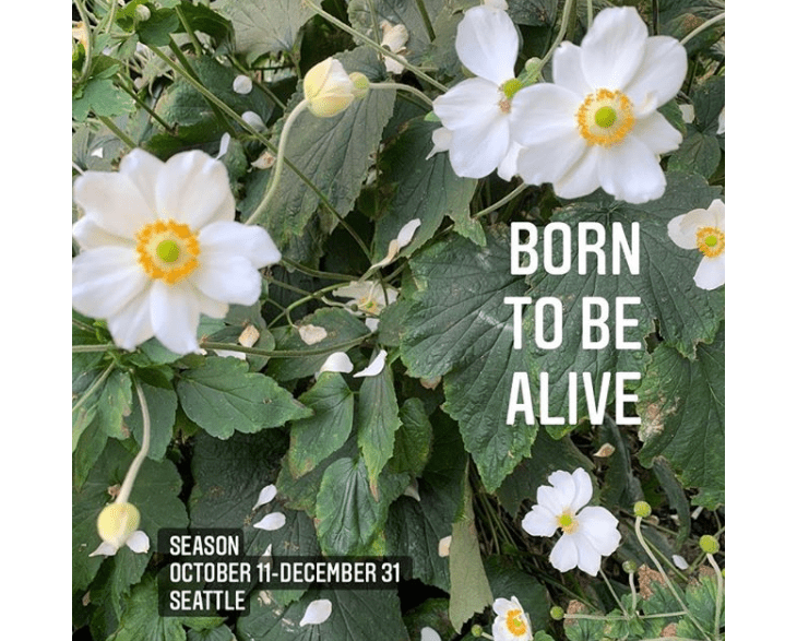 """Exhibition flyer for """"Born to Be Alive"""" at Season Gallery, featuring a photograph of white anemone flowers and their green leaves with the exhibition title overlaid in white and the exhibition dates and location, October 11-December 31, Seattle, in white text with an opaque black background."""