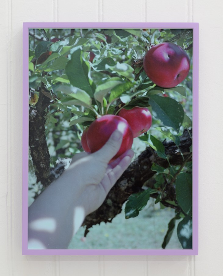 A white woman's hand picking a sun-dappled red apple from a tree