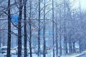 雪が降っている大阪の御堂筋