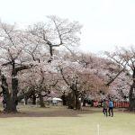 桜を見る会の招待者名簿は公文書?廃棄は適切?気になるので調査