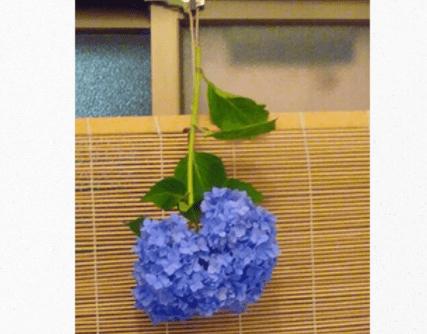 紫陽花のおまじない トイレ