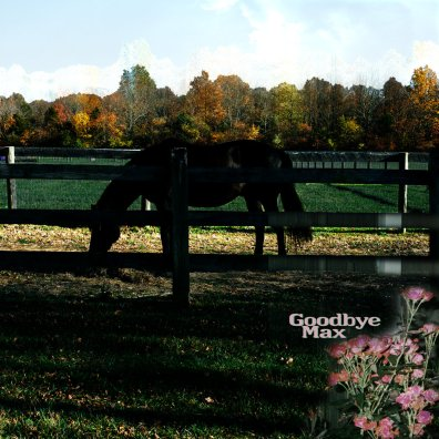 goodbye max self titled album art photo of horse in a field