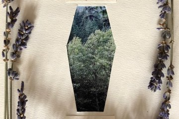 funeral lakes golden season album art, collage of forest photo framed by sprigs of lavender