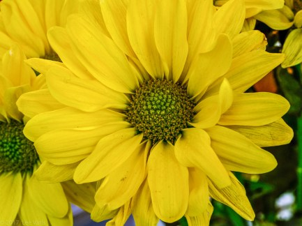 Yellow Flower-1