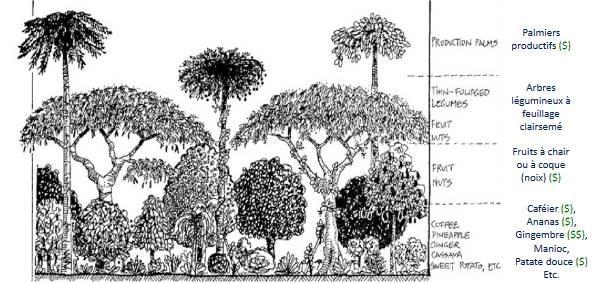 Document FAO département des forêts