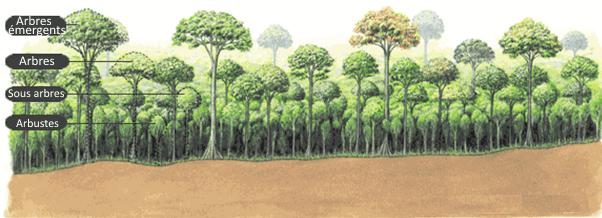 Représentation d'une plantation