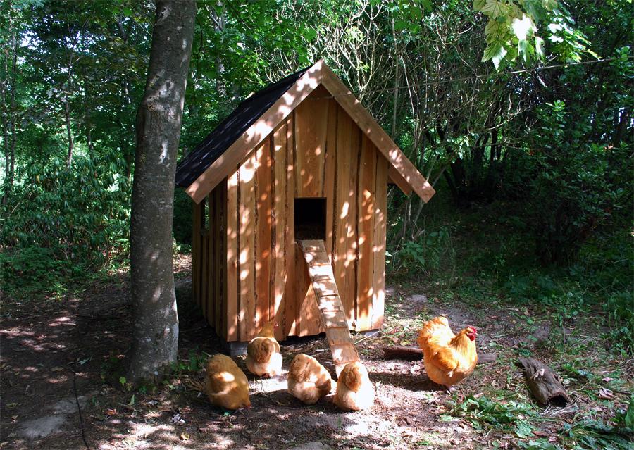 Vores hønsehus med de første Orpington kyllinger.