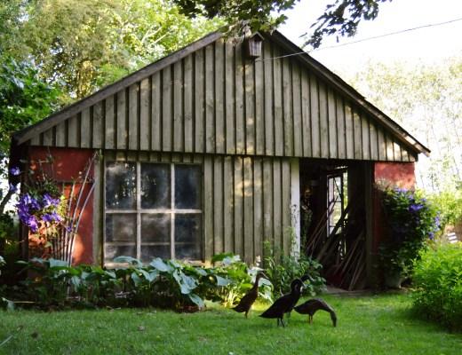 Havehuset, hvor løbeænderne bor midlertidigt.