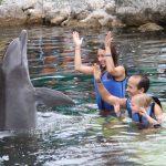 SEO Family with Dolphin