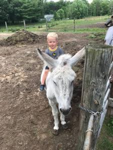 Donkey Theo