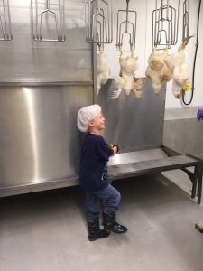 Processing chickens at MSU Meat Labs