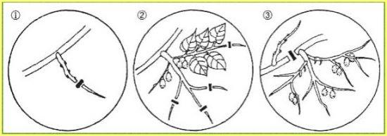 Diagramme de garniture de cywy