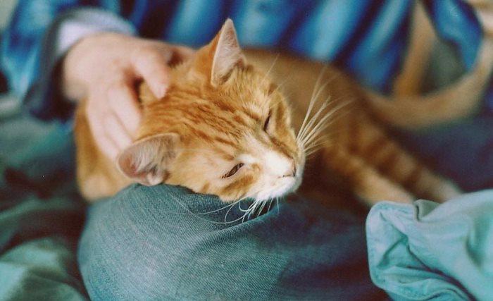 Как кошки мурчат