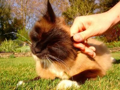Инсульты у кошек и котят: как лечить патологию. Что делать при инсульте у кошек — как оказать первую помощь, терапия и восстановительный процесс, возможные последствия