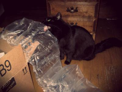 Ak si kupujeme či adoptujeme mačičku a chceme mať istotu, že je zdravé a spokojné, určite bude.