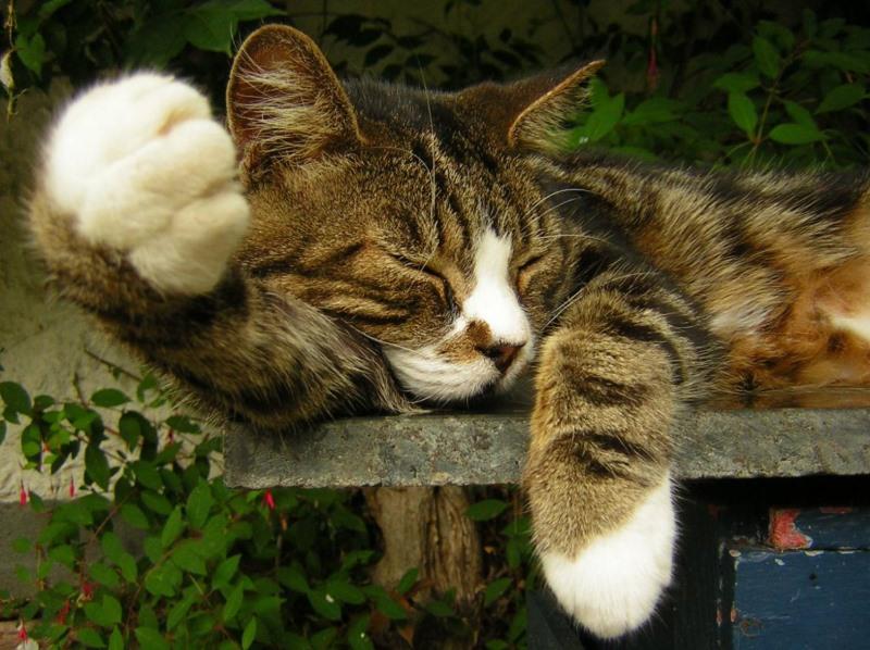 Кот дергается когда лежит причины. Кошка дергается во сне, есть ли причины для волнений