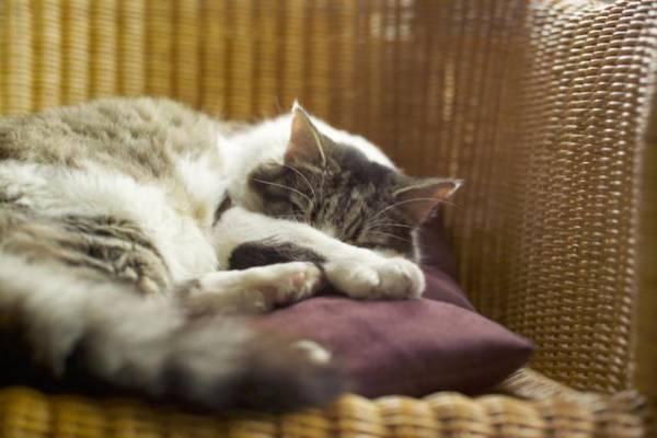 Поведение кошки за день до родов. Поведение кошки перед родами: признаки, которые нельзя пропустить. Нормальное протекание беременности у кошки