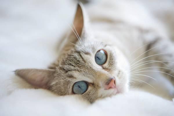 Саркома у кошек: причины, симптомы, диагностика и методы лечения. Саркома мягких тканей у кошек Что такое рак, что его провоцирует и как он возникает у кошек и котов