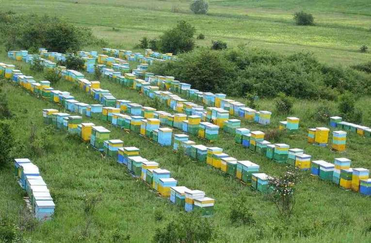 Ajutor financiar pentru apicultorii vasluieni, afectați în primăvara acestui an. Au primit peste 1,3 milioane lei!