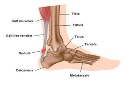 bones in your foot diagram glowshift oil pressure gauge wiring achilles tendonitis - vasta performance training and physical therapy