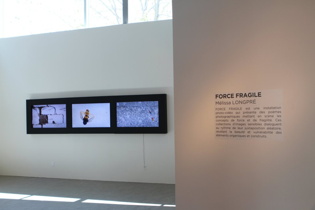 Mélissa LONGPRÉ | FORCE FRAGILE | Installation vidéo