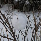 Flavie BARBEROUSSE | Art in situ en contexte hivernal