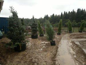 Весенняя посадка деревьев
