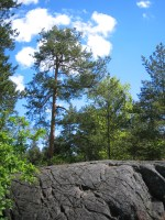 Träd och klippor i Ryssbergen