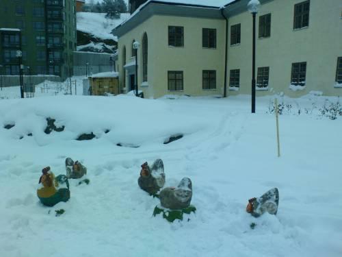 Vintervy med Danviks hospital och hönsen på lekplatsen