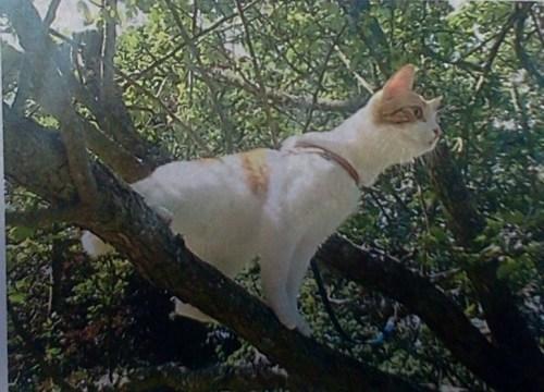 Katten Morris bortsprungen från Henriksdalsberget