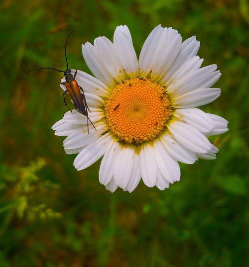 En stekel i en blomma i Engelska parken, backen mellan Danvikshem och Finnboda / Vilans skola. Engelska parken ska nötas i kanterna av två olika planprogram.